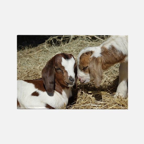 Cute Baby goat Rectangle Magnet