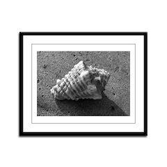 Conch Shell (B&W) Framed Panel Print