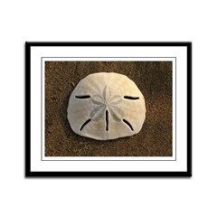 Sand Dollar (Color) Framed Panel Print