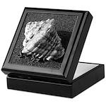 Conch Shell (B&W) Keepsake Box