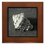 Conch Shell (B&W) Framed Tile