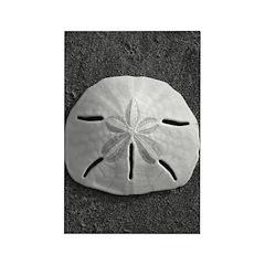 Sand Dollar (B&W) Rectangle Magnet