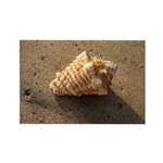 Conch Shell (Color) Rectangle Magnet