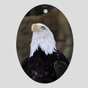 Proud Eagle Veteran Oval Ornament