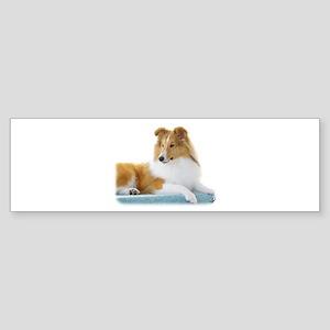 Shetland Sheepdog AF113D-030 Sticker (Bumper)