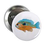 Longear Sunfish fish 2 2.25