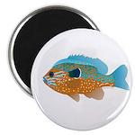Longear Sunfish fish 2 Magnet