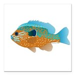 Longear Sunfish fish 2 Square Car Magnet 3
