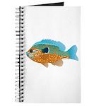 Longear Sunfish fish 2 Journal