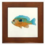 Longear Sunfish fish 2 Framed Tile