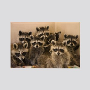 Raccoon Magnet Magnets
