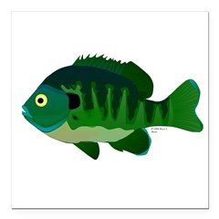 Bluegill sunfish v2 Square Car Magnet 3