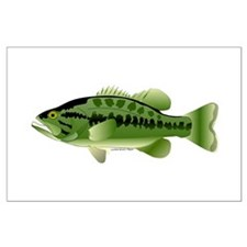 Largemouth Bass (Black Bass Family) Posters