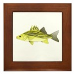 Yellow Bass fish 2 Framed Tile