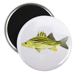 Yellow Bass fish 2 Magnet