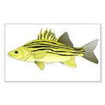Yellow Bass fish 2 Sticker