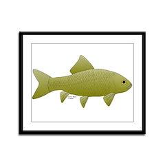 Bigmouth Buffalo fish Framed Panel Print