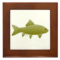 Bigmouth Buffalo fish Framed Tile