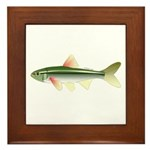 ozark shiner Framed Tile