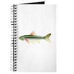 ozark shiner Journal