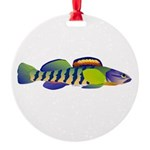 orangethroat darter Ornament