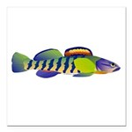 orangethroat darter Square Car Magnet 3