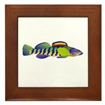 orangethroat darter Framed Tile