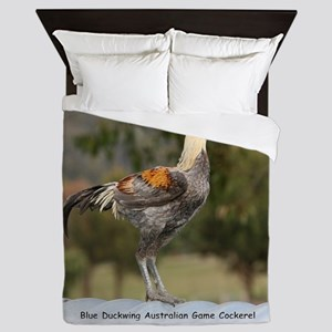 Blue Duckwing Australian Game Cockerel 9Y557D-006