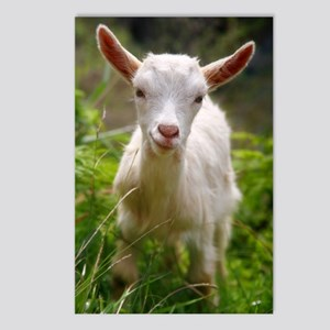 Baby goat Postcards (Package of 8)