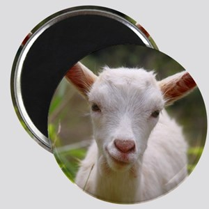 Baby goat Magnet