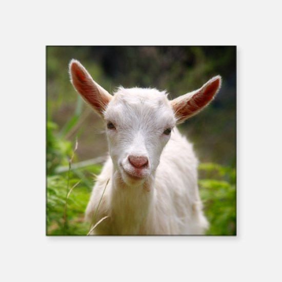 Baby goat Sticker