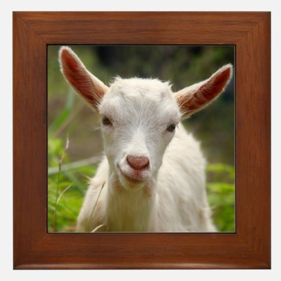 Baby goat Framed Tile
