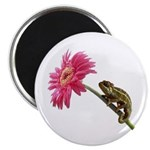 Chameleon Lizard on pink flower Magnet