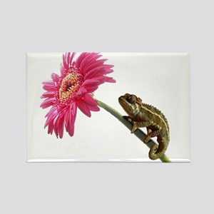 Chameleon Lizard on pink flower Rectangle Magnet