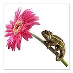 Chameleon Lizard on pink flower Square Car Magnet