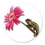 Chameleon Lizard on pink flower Round Car Magnet