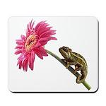 Chameleon Lizard on pink flower Mousepad