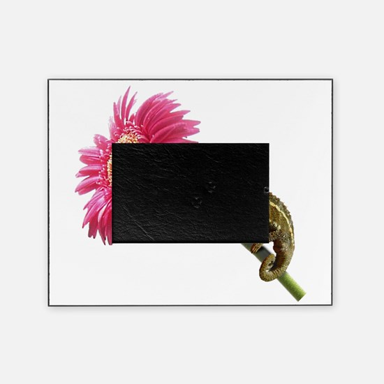Chameleon Lizard on pink flower Picture Frame