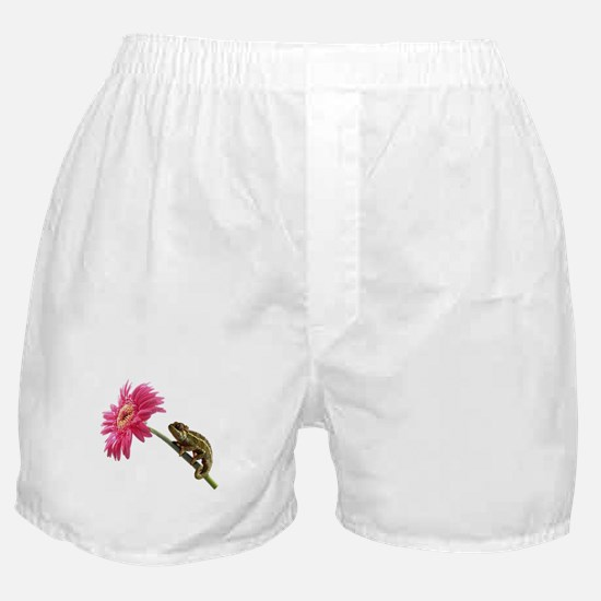 Chameleon Lizard on pink flower Boxer Shorts