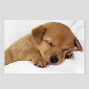 Cute Labrador Puppy Postcards (Package of 8)