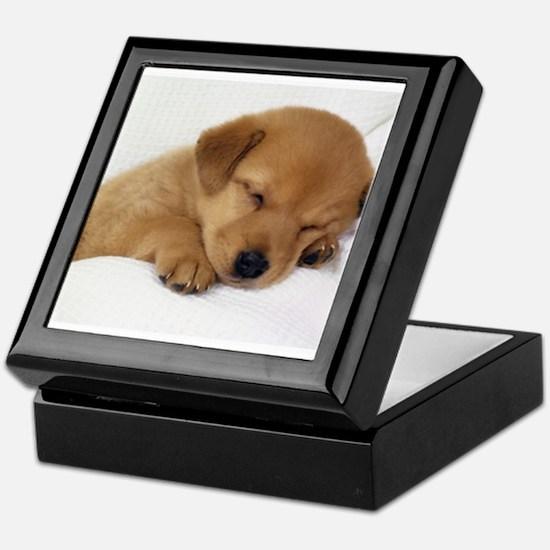 Cute Labrador Puppy Keepsake Box