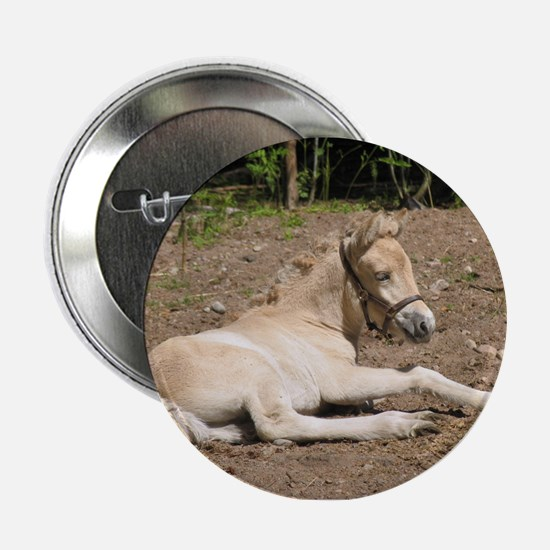 """Fjord Foal 1"" Button"