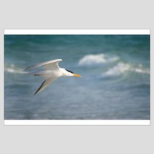Flight of royal tern Posters