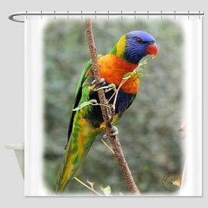 Rainbow Lorikeet 9Y209D-157 Shower Curtain