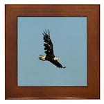Ragged Eagle Framed Tile
