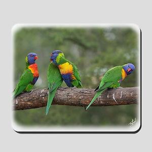 Rainbow Lorikeets 9Y543D-002 Mousepad