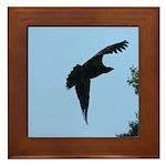 Young Flying Eagle Framed Tile
