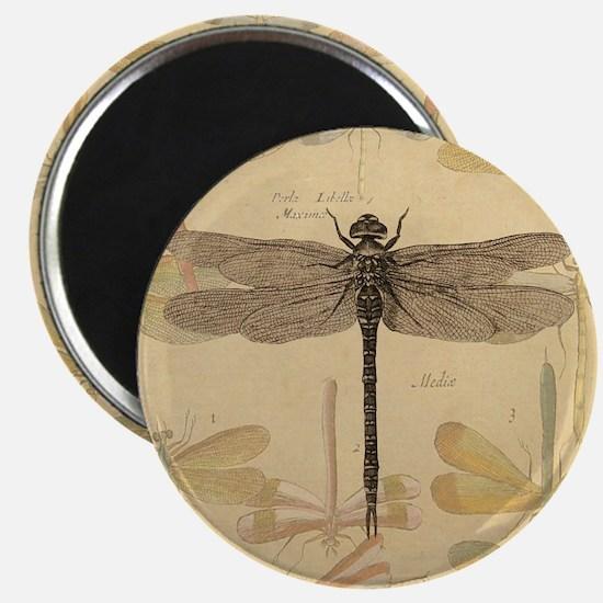 Dragonfly Vintage Magnet