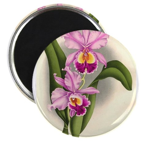 "Orchid Antique Botanical Prin 2.25"" Magnet (10 pac"