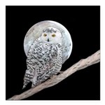 Snowy Owl and Moon Square Car Magnet 3